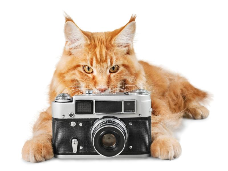 Adorable red cat isolated with camera on white stock photo