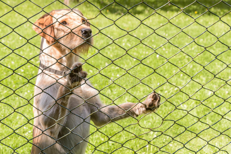 Adorable shot of a dog yearning to come across the fence stock image