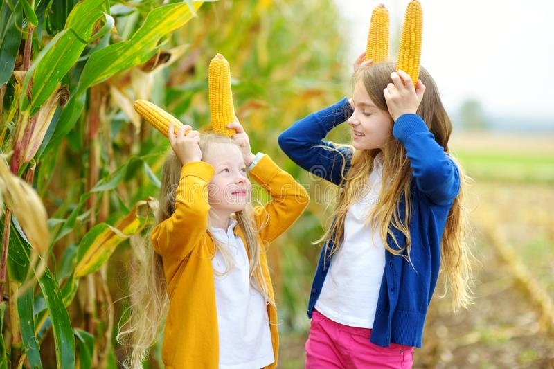 Adorable sisters playing in a corn field on beautiful autumn day. Pretty children holding cobs of corn. Harvesting with kids. Autumn activities for children royalty free stock photography