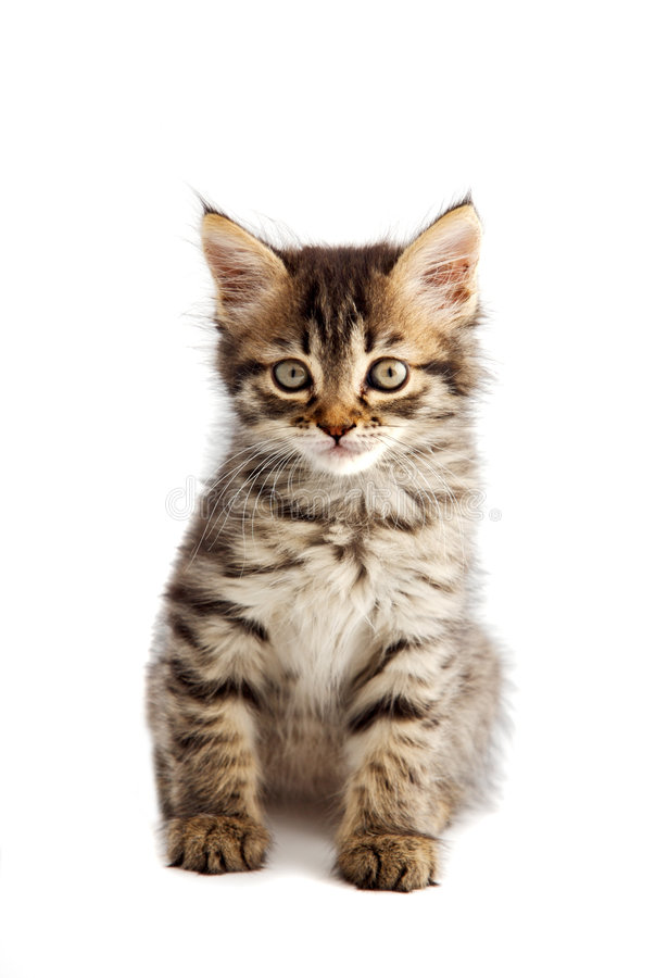 Adorable small cat on white bottom stock photos