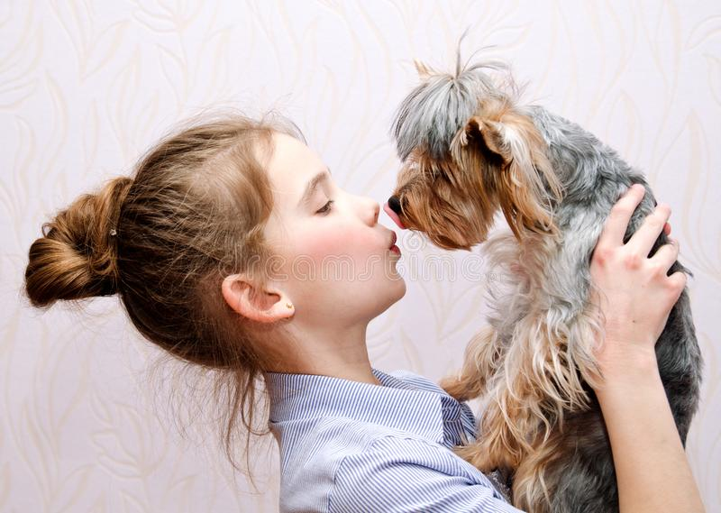 Adorable smiling little girl childl holding and playing with puppy yorkshire terrier. Adorable smiling little girl child schoolgirl holding and playing with stock photography