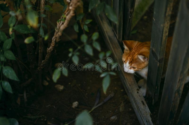 Adorable spotted cat walking on street. Cute domestic animal on tiles. Playful pet wandering outdoors. Portrait of homeless fluffy creature outside. Carnivore royalty free stock images