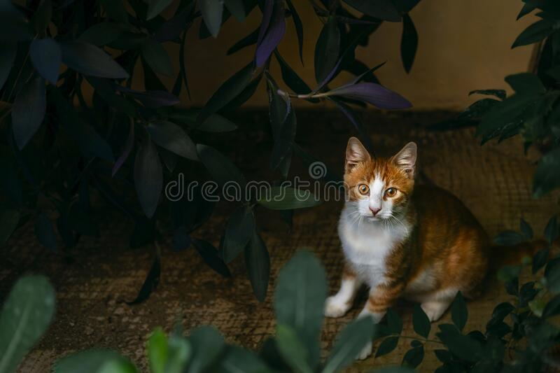 Adorable spotted cat walking on street. Cute domestic animal on tiles. Playful pet wandering outdoors. Portrait of homeless fluffy creature outside. Carnivore stock photos