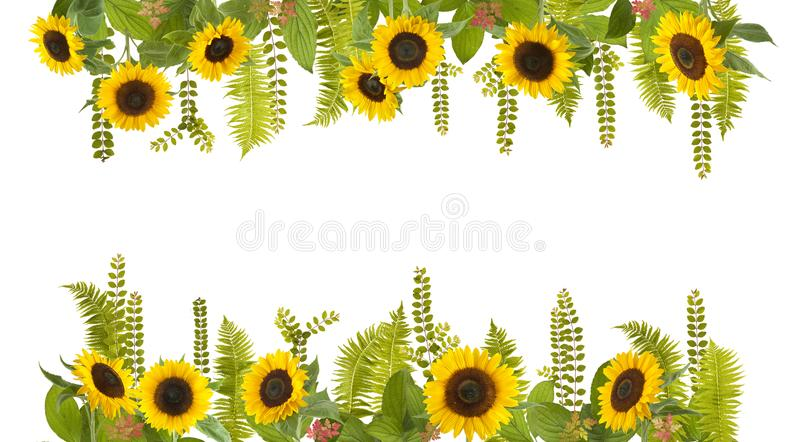 Adorable sunflower background with fern and leaves. Free space for your text stock photography