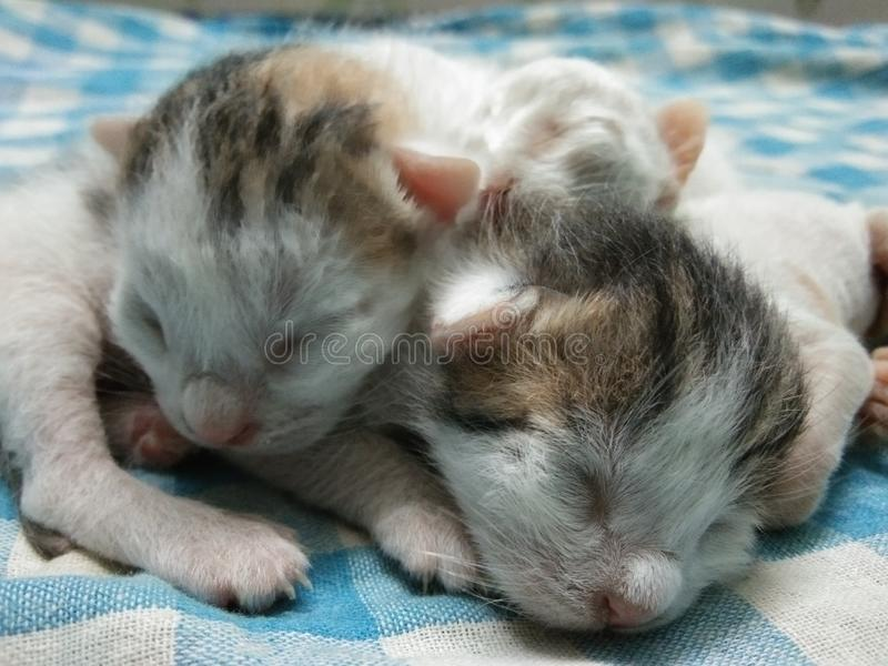 Adorable Three Baby Kittens Together royalty free stock photography