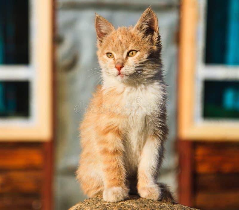 Adorable yellow kitty royalty free stock photo