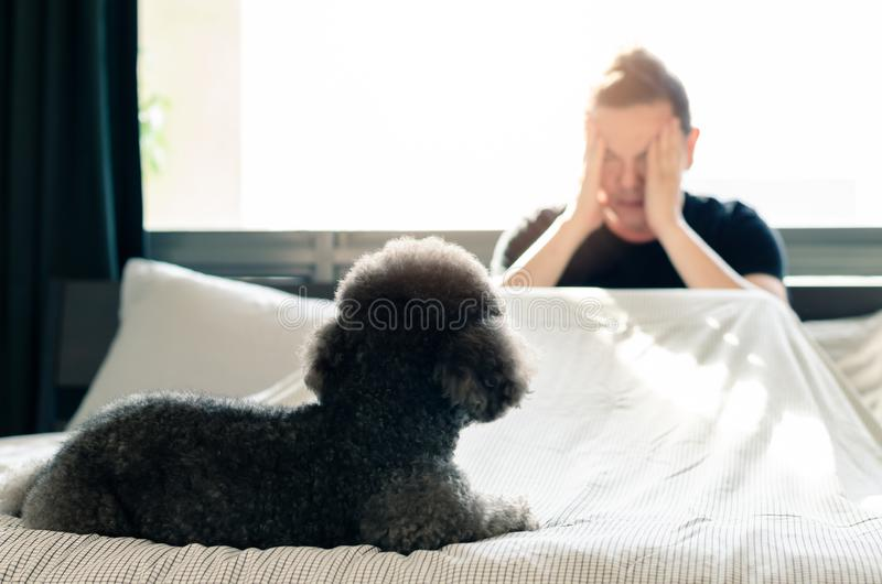 An adorable young black Poodle dog looking at the owner who feel sad and serious on the bed after wake up in the morning with royalty free stock photography