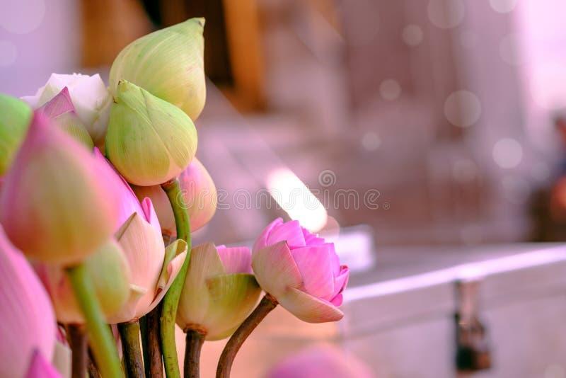 Adore os lótus cor-de-rosa fotografia de stock