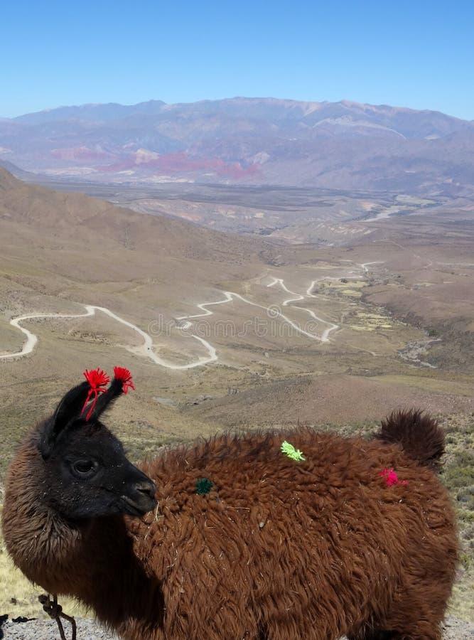 Free Adorned Llama And Winding Road Stock Photos - 132470603