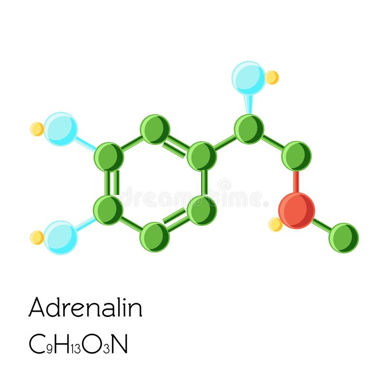 Adrenalin, Adrenaline, Epinephrine hormone structural chemical formula isolated on white background. Cartoon vector illustration in flat style vector illustration