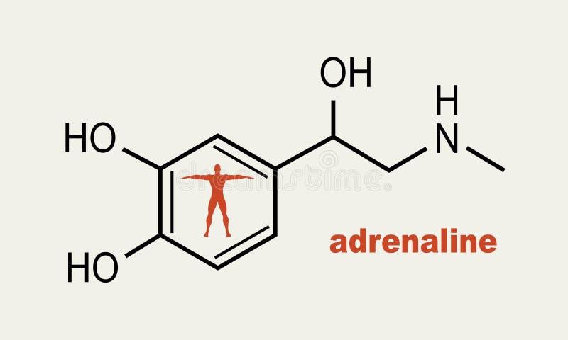 Adrenalina da hormona da fórmula ilustração royalty free