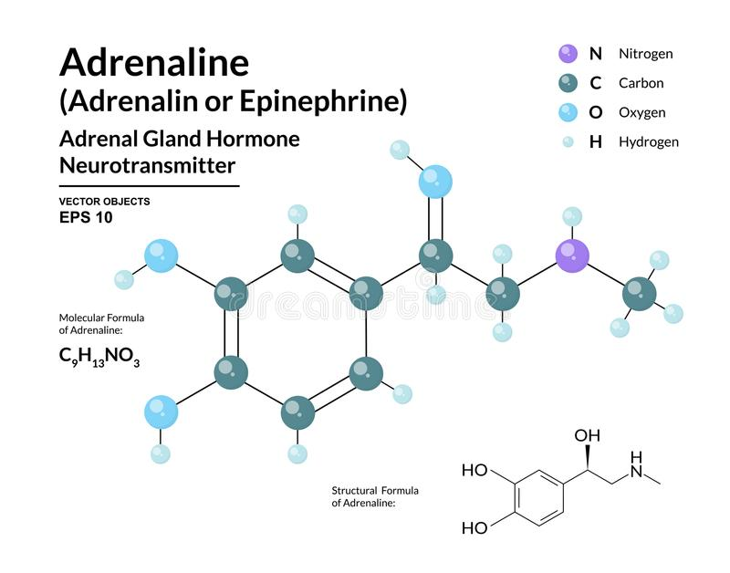 Adrenalinehormoon epinefrine neurotransmitter Strijd of Vluchtreactie Structurele Chemische Moleculaire Formule en 3d Model vector illustratie