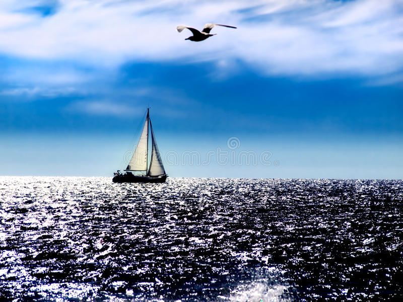 Download Adriatic noon stock image. Image of gull, firmament, sail - 16180987