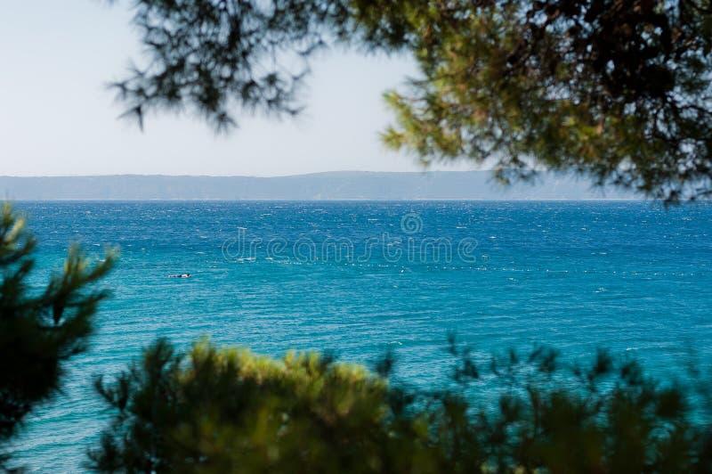 Adriatic sea framed by tree stock photos