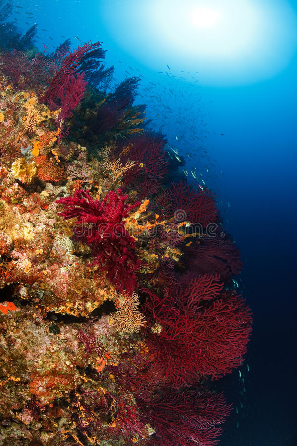 Adriatic underwater ambient. Underwater ambient - wall with gorgonias stock photography
