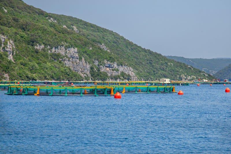 Adriatische Kustreis Limskifjord in Istria Het Adriatische Overzees van het oesterlandbouwbedrijf stock foto