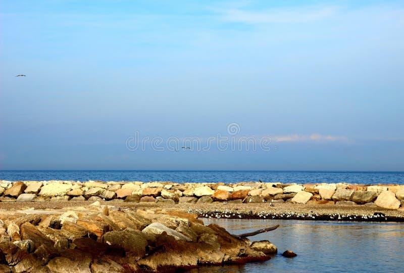 Adriatycki morze i skalista plaża z mnóstwo seagulls fotografia royalty free