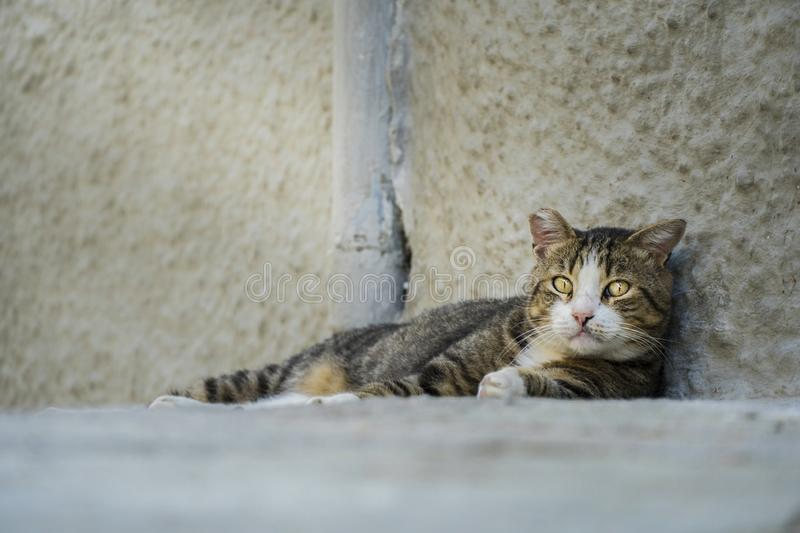 Adult abandoned stray cat looking sad at the camera royalty free stock photo