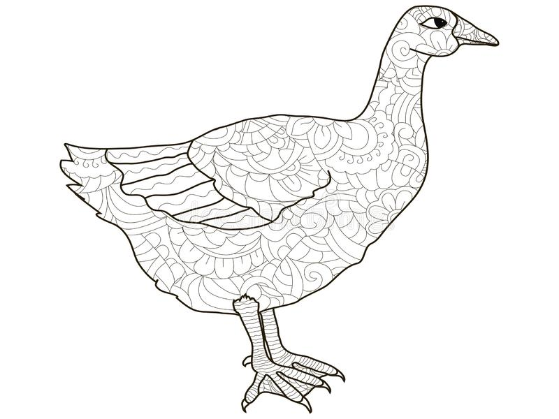 Adult antistress coloring bird, duck, goose pattern, astrakhan. Illustration of black lines doodle, white background. Adult antistress coloring bird, duck, goose royalty free illustration