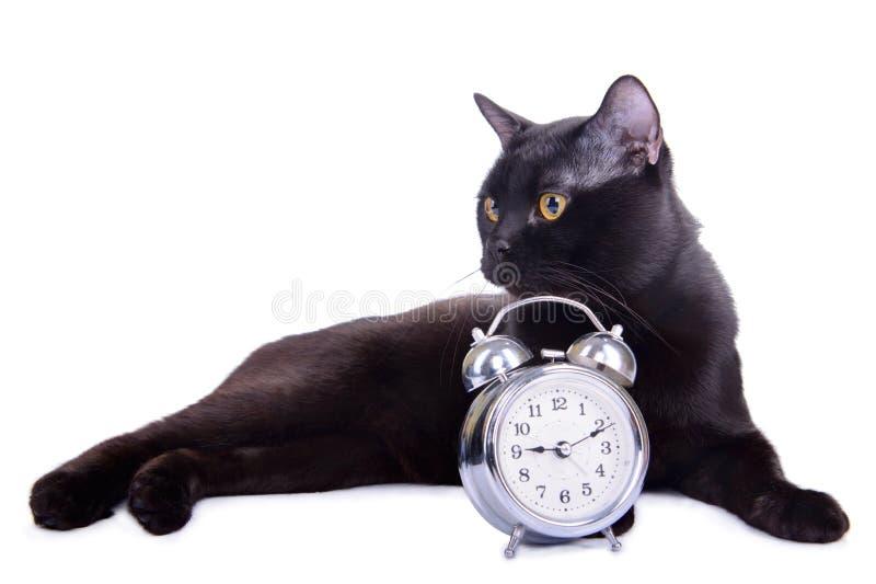 Adult black cat stock photos