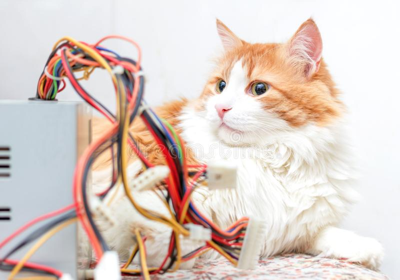 Adult cat and computer wires. Pretty adult red cat and computer wires in bright relax home interior stock images