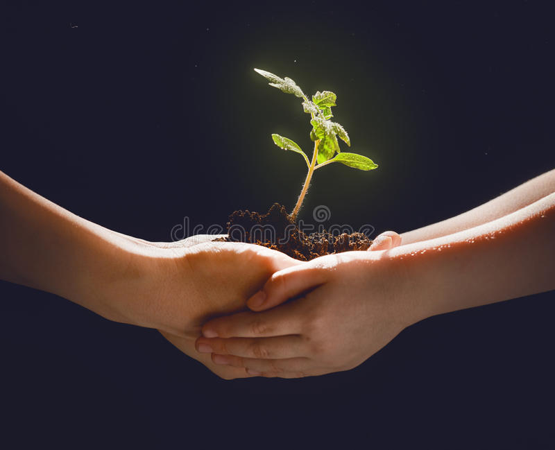 Adult and child holding green sprout. Concept of generation and development. Adult and child are holding in hands green sprout. Spring, nature, eco and care royalty free stock images