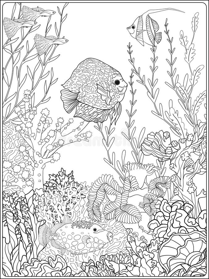 - Coral Reef Coloring Page Stock Illustrations – 676 Coral Reef Coloring Page  Stock Illustrations, Vectors & Clipart - Dreamstime