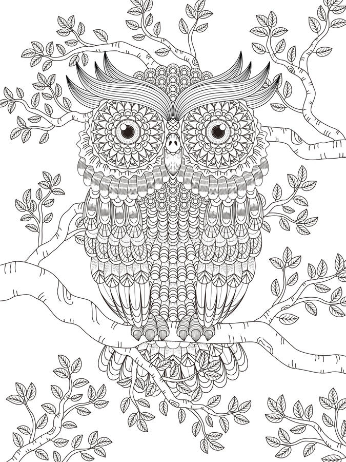 Adult Coloring Page With Gorgeous Owl Stock Illustration