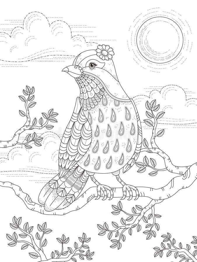 Adult coloring page with lovely lady bird vector illustration