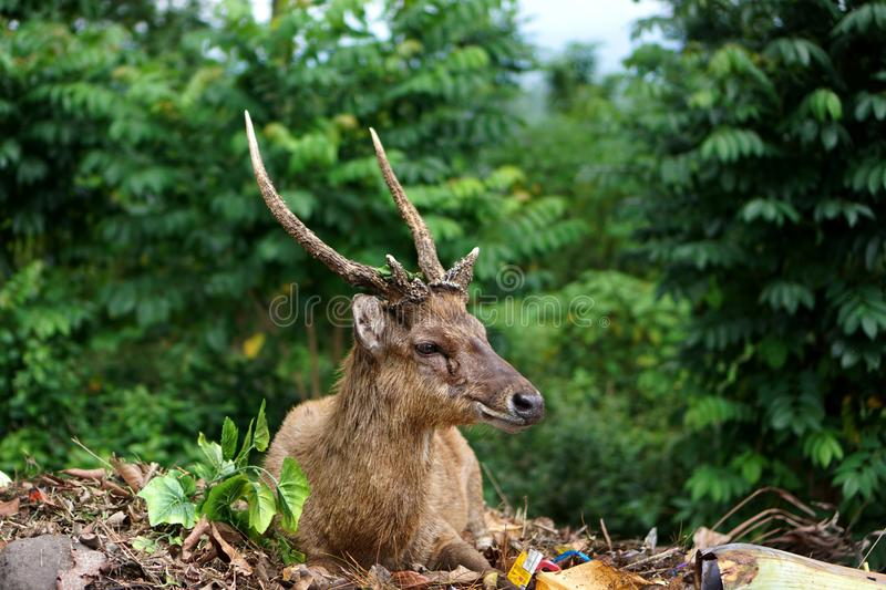 Adult deer in the autumn forest royalty free stock images