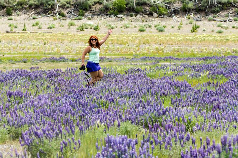 Adult female poses in a field of purple lupine wildflowers in the June Lake Loops in the Eastern Sierra mountains of California royalty free stock image