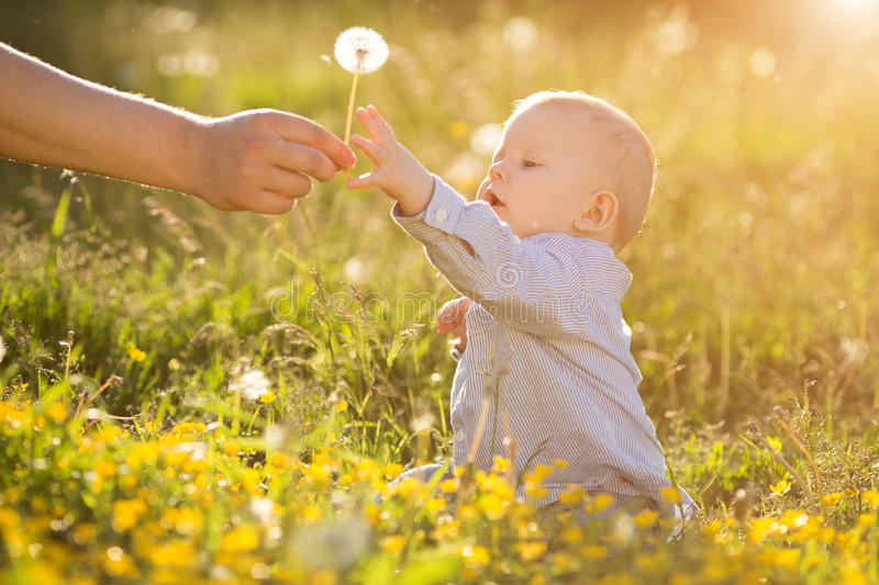 Adult hand holds baby dandelion at sunset Kid sitting in a meadow Child in field Concept of protection Allergic to flowers pollen. Adult hand holds baby stock image