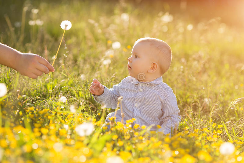 Adult hand holds baby dandelion at sunset Kid sitting in a meadow Child in field Concept of protection Allergic to flowers pollen. Adult hand holds baby royalty free stock photos