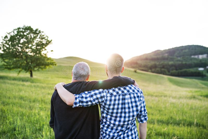 An adult hipster son with senior father standing in nature at sunset. Rear view. stock images