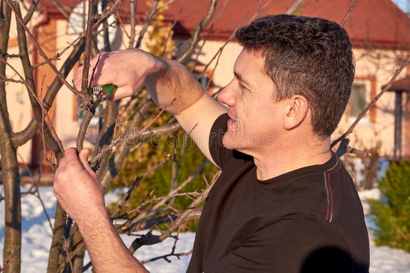 Adult man with shears in hand pruning tree branches in early spring. Closeup view royalty free stock images