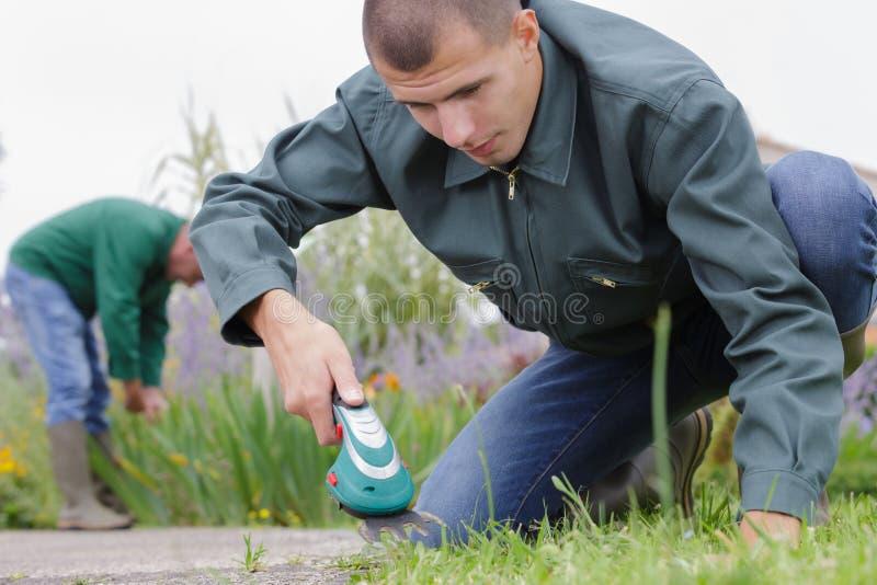 Adult man watering sapling in backyard royalty free stock image