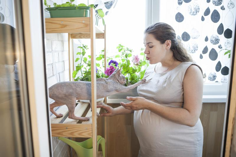Adult pregnant woman kissing her bald cat coming in her hands, domestic room royalty free stock photography