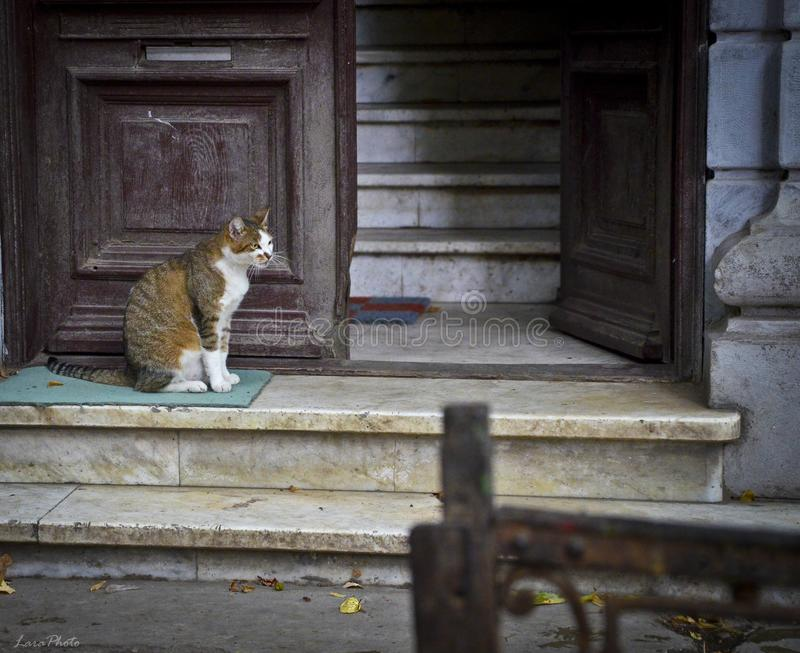 Adult stray cat sitting on a dirty carpet at a building entrance with wooden open door and stone stairs royalty free stock photo