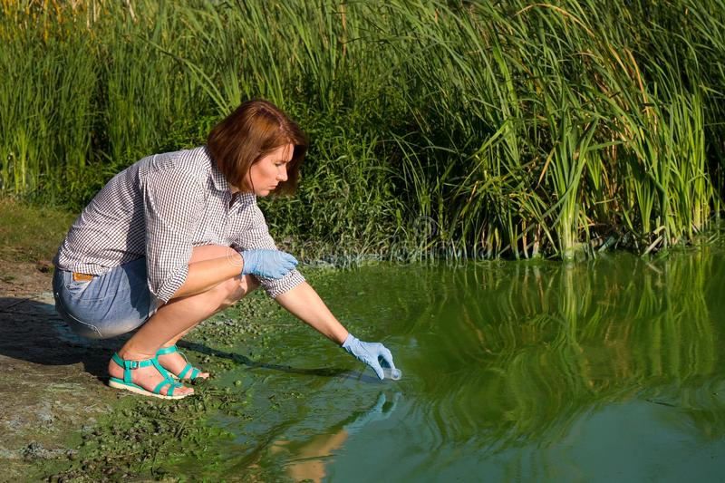 Adult woman ecologist taking samples of green algae in test tube on riverbank. In summer. research of ecological problems. environment, nature, save earth royalty free stock photos