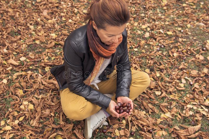 Adult woman enjoys wild chestnuts gathered from falling autumn l royalty free stock photo