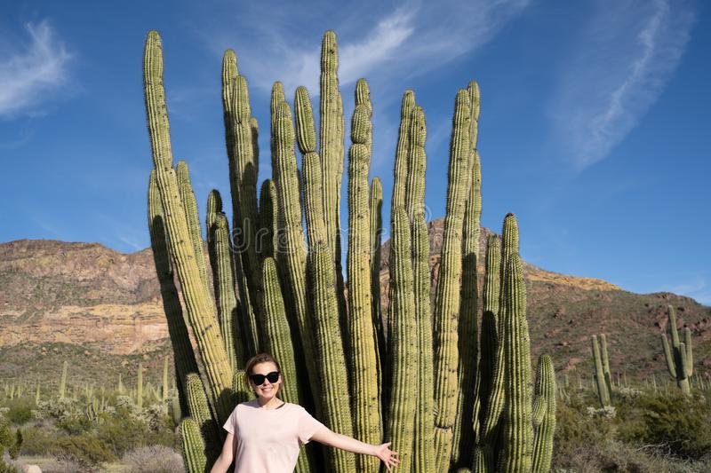 Adult woman poses with a large Organ Pipe Cactus in Arizona at the National Monument.  stock images