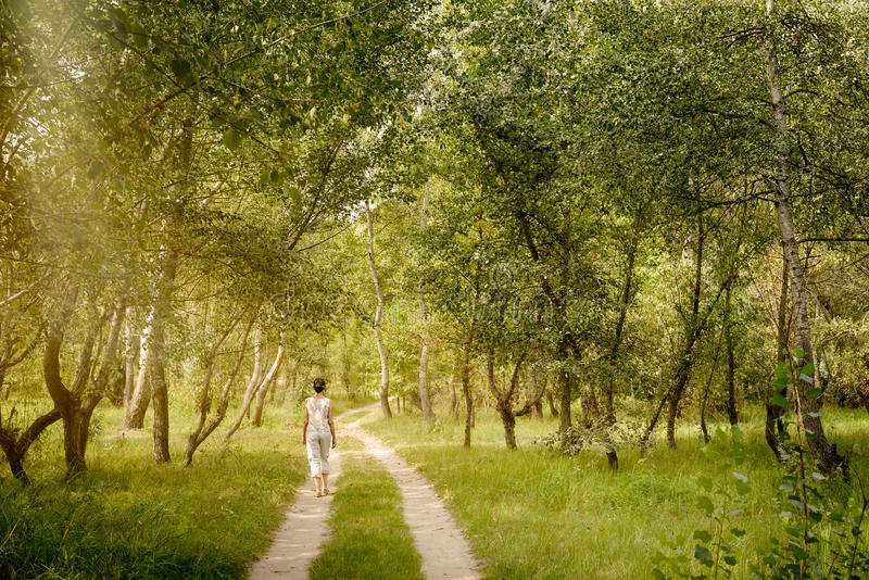 Adult woman is walking in the forest. An adult woman is walking in the forest near the city of Kiev in Ukraine. Sun rays pass through the tree branches creating royalty free stock photography