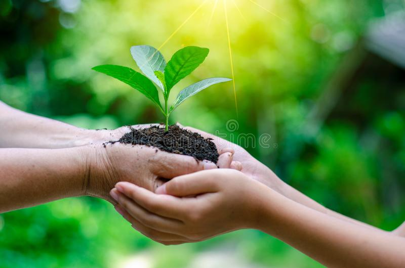 Adults Baby Hand tree environment Earth Day In the hands of trees growing seedlings. Bokeh green Background Female hand holding tr royalty free stock image