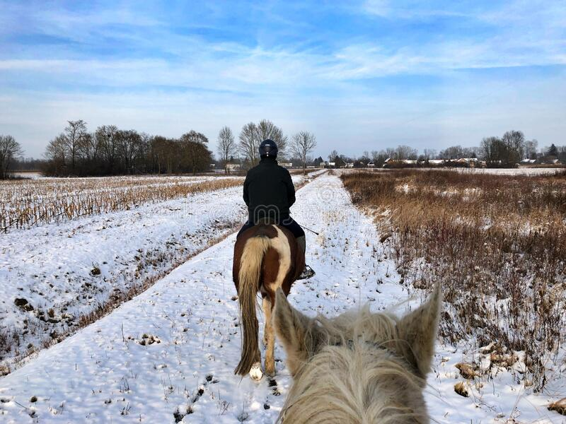 Horse riding in winter stock photography