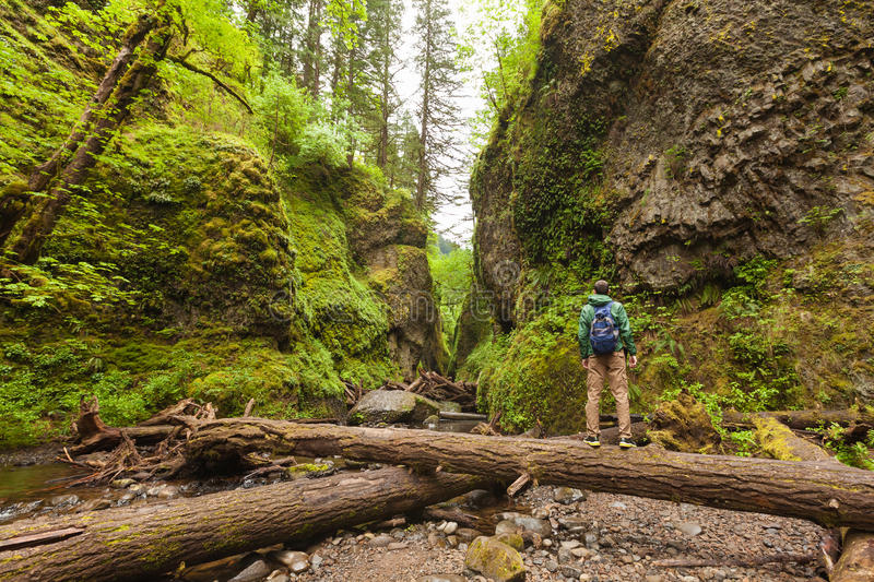 Adventure man hiking with backpack, walking in Oneonta Gorge, outdoor lifestyle royalty free stock photo