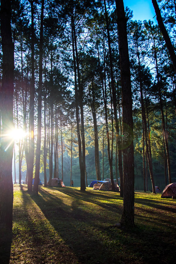 Adventures Camping and tent under the pine forest near water outdoor in morning and sunset at Pang-ung, pine forest park , Mae Hon. G Son, North of Thailand royalty free stock photography
