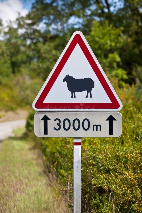 Advertencia de la señal de tráfico de ovejas en el camino foto de archivo