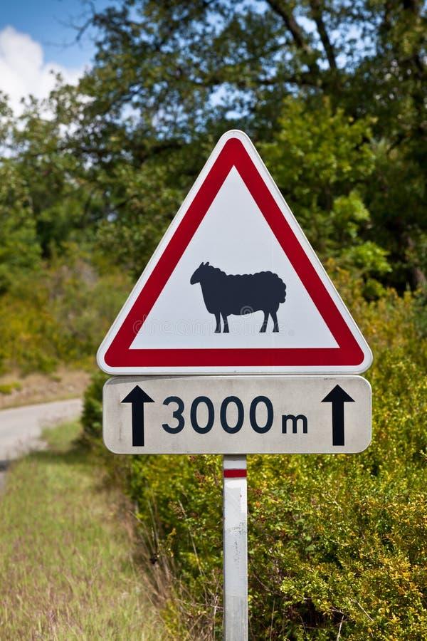 Advertencia de la señal de tráfico de ovejas en el camino fotografía de archivo libre de regalías
