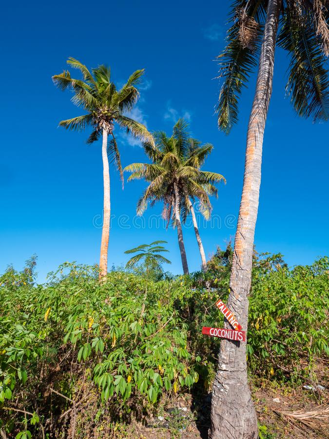 Advertencia sobre los cocos que caen en un tronco de palmera imagenes de archivo