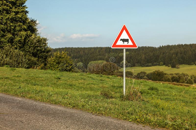 Advirta as vacas que cruzam o sinal ao lado da estrada secundária, floresta no dista fotos de stock royalty free
